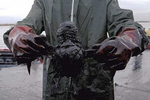 oil spill effects bird 300x201 Causes and Effects of Marine Pollution